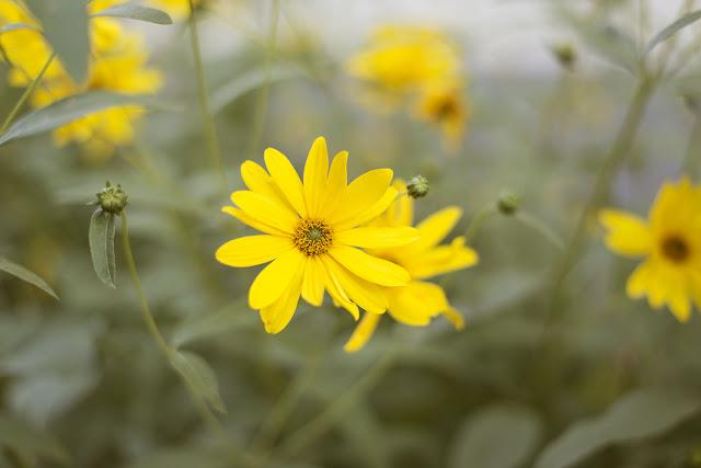 Blumen Saarbrücken