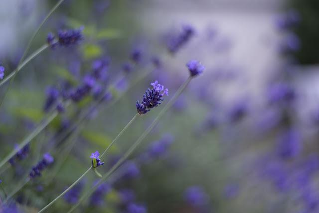 Blumen Saarland Fotografie