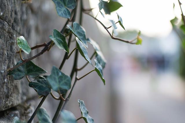 Herbst Fotografie