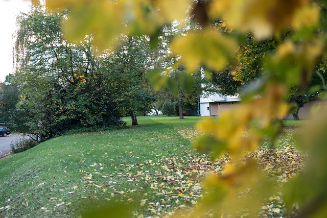 Herbstlaub Saarland Fotografie