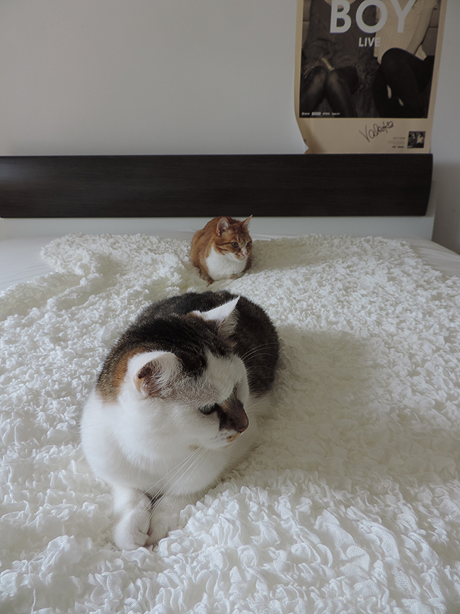 Blogger-Room-Tour-Interior-Einrichtung-kleine-Wohnung-Hauskatzen
