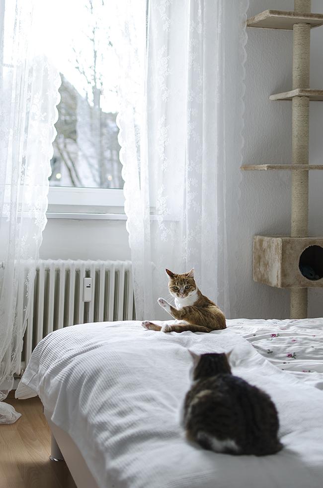 Blogger-Einrichtung-Roomtour-Interior-Ikea-hauskatzen-tierfotografie-katze