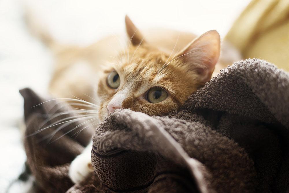 freitagspost wie eine katze das leben ndert. Black Bedroom Furniture Sets. Home Design Ideas