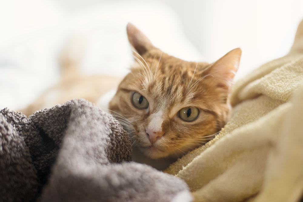 können menschen katzen anstecken