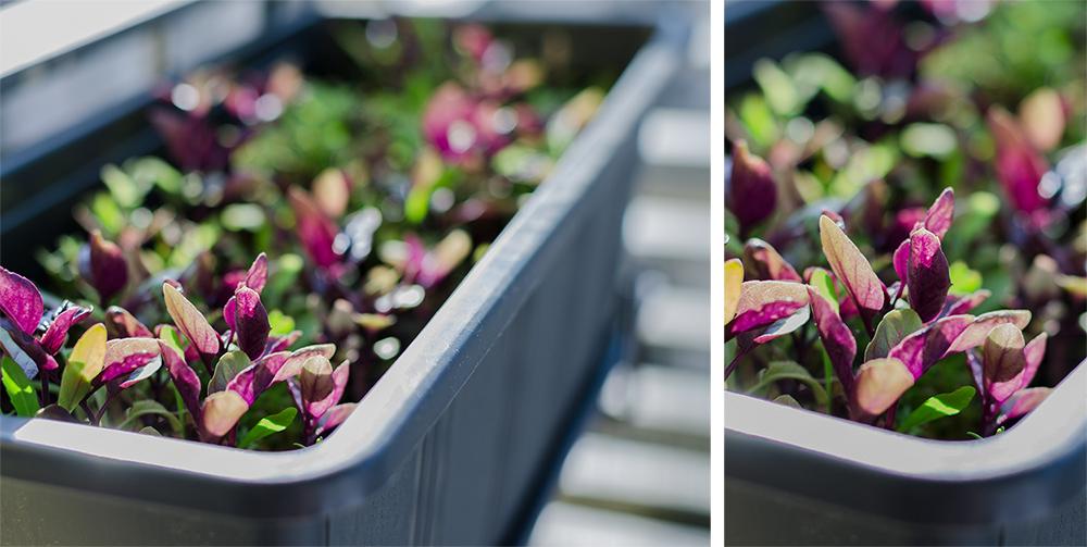 andysparkles-balcony-gardening-grillkraeuter-neudorff