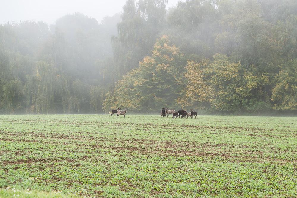 andysparkles-ViOtop im Naturpark Saar-Hunsrück
