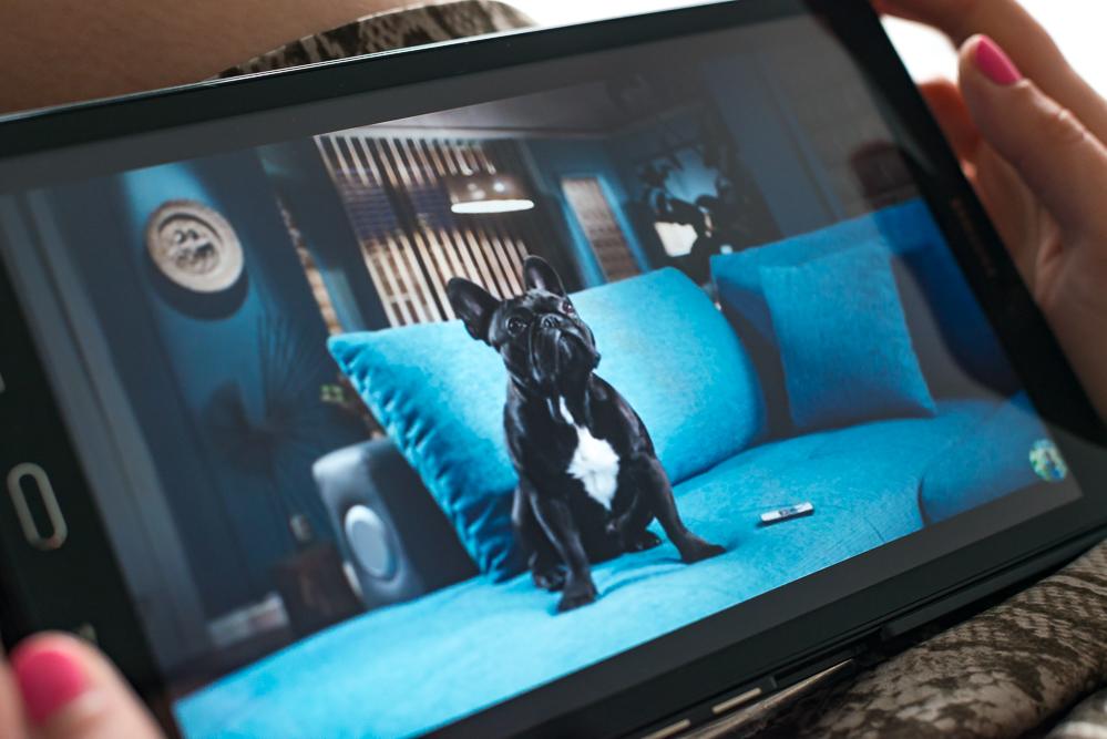 andysparkles-OTTO Shopping Festival-Oskar-Lustige Tiervideos zum Entspannen