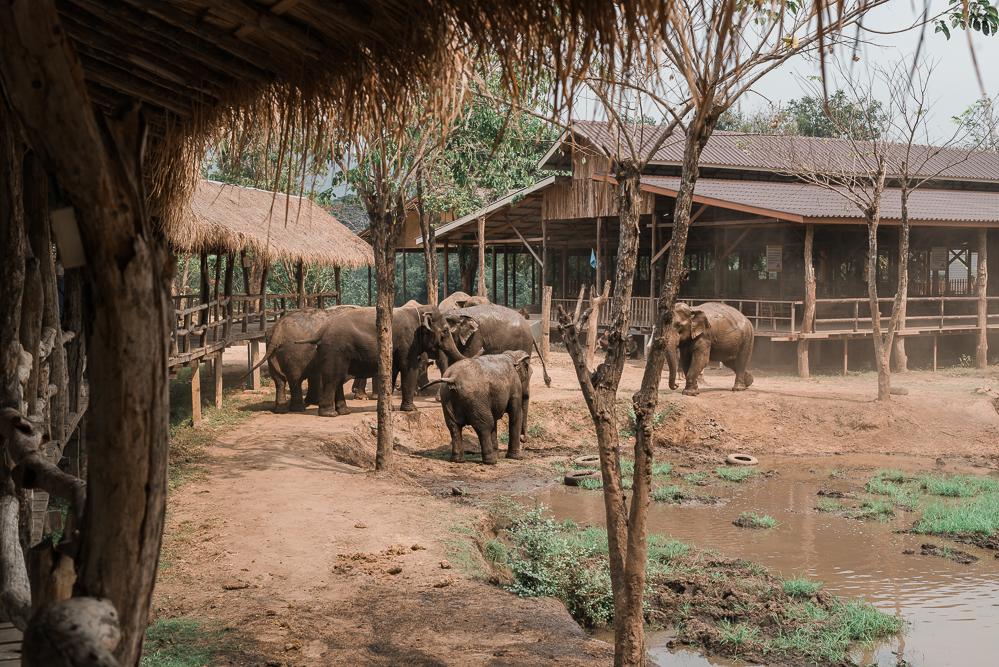 Elephant World in Kanchanaburi-Thailand Reisetipps-Reiseblog Asien-andysparkles.de
