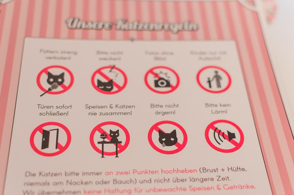 Katzencafés in Berlin-BaristaCats-Katzencafé-andysparkles.de