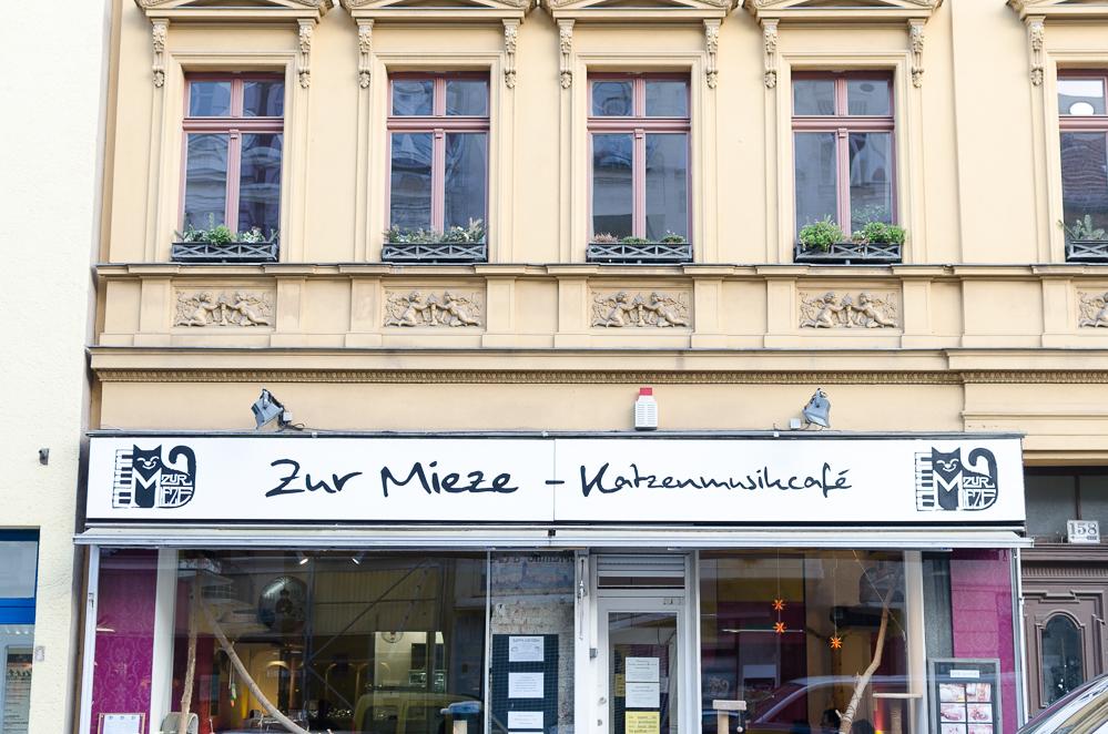 Katzencafés in Berlin-Zur Mieze-Katzencafé-andysparkles.de