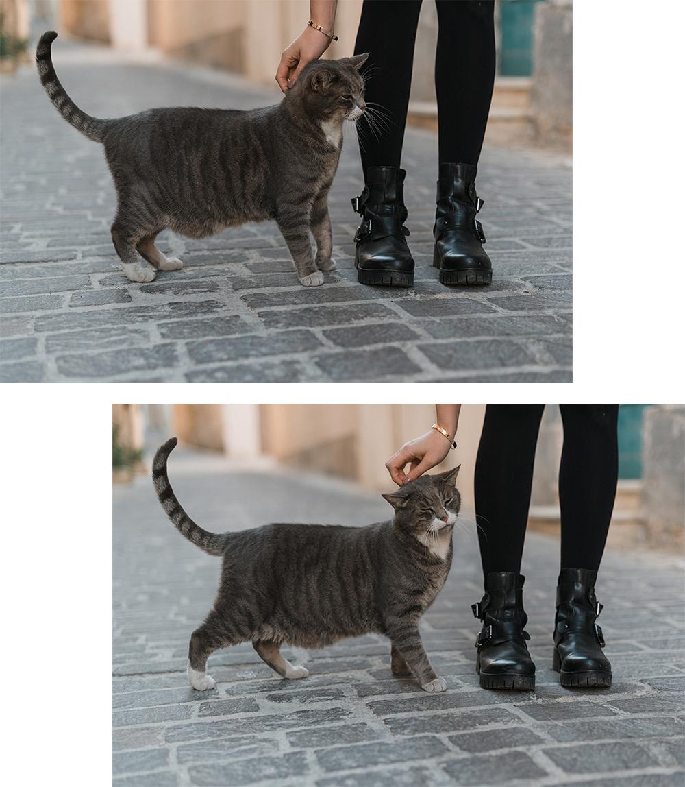 Katze-Malta
