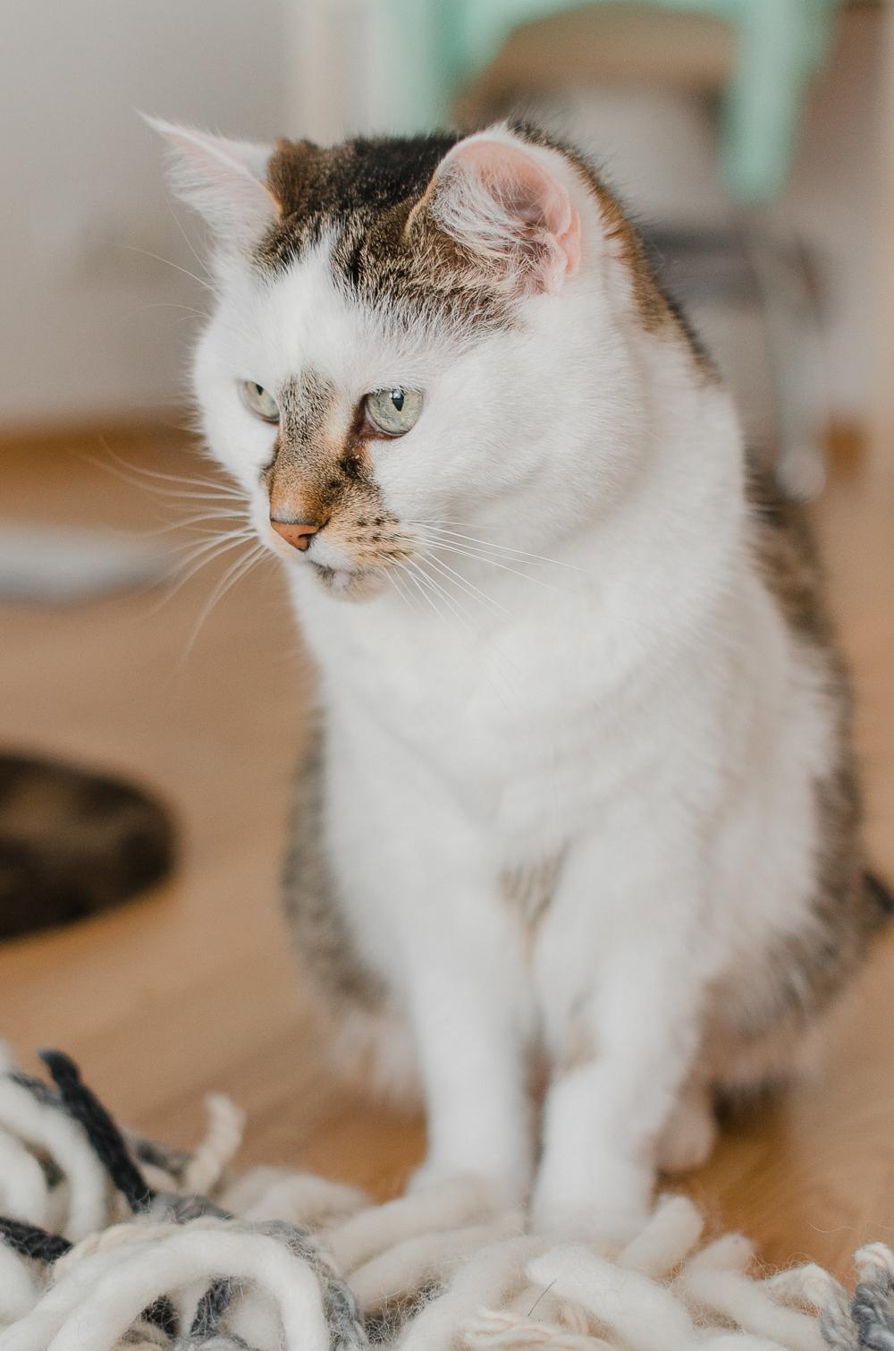 So vermeidest du Anfängerfehler in der Katzenhaltung-Haustierhaltung-Wohungskatzen-Purina-andysparkles