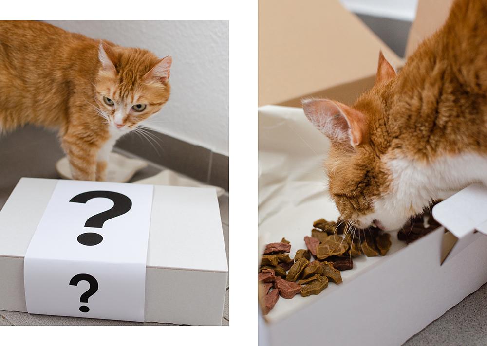Katzensnack-wir teste Katzensnack-Katzen-andysparkles
