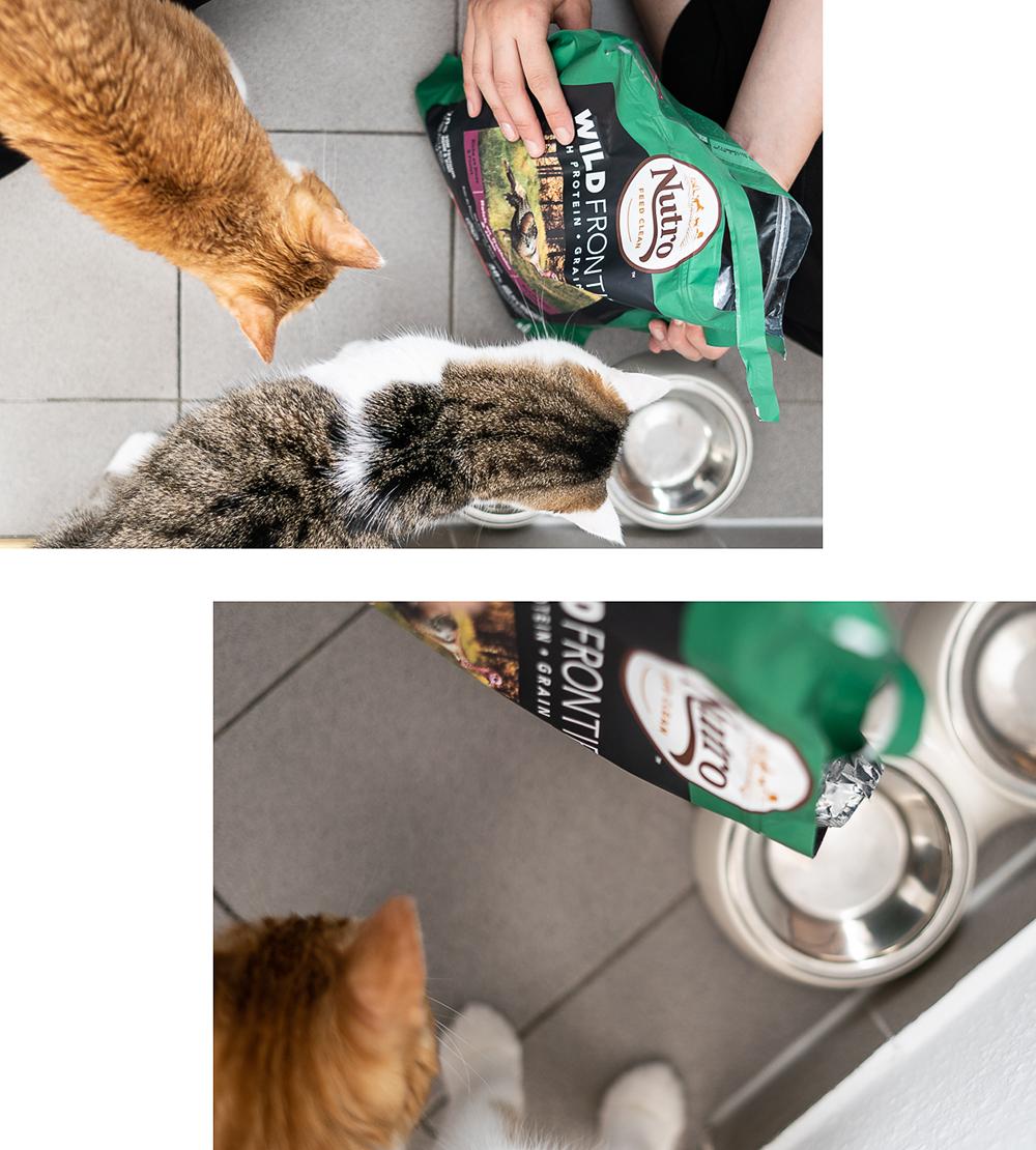 Wie füttere ich meine Katze-Katzenfutter-Nutro Clean-Wild Frontier-Blog-andysparkles