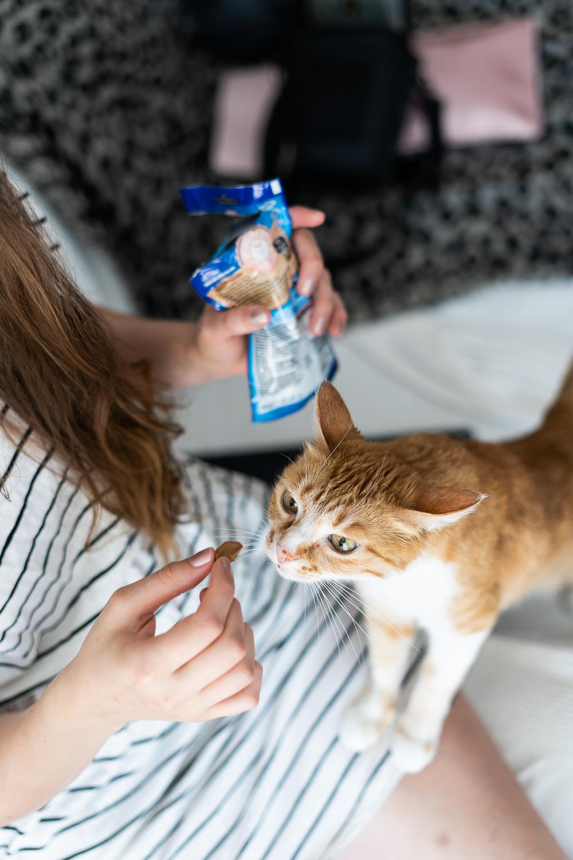 Leckerlis für Katzen-FELIX Mini Filetti-Katzenfutter-Katzen Leckerli-andysparkles