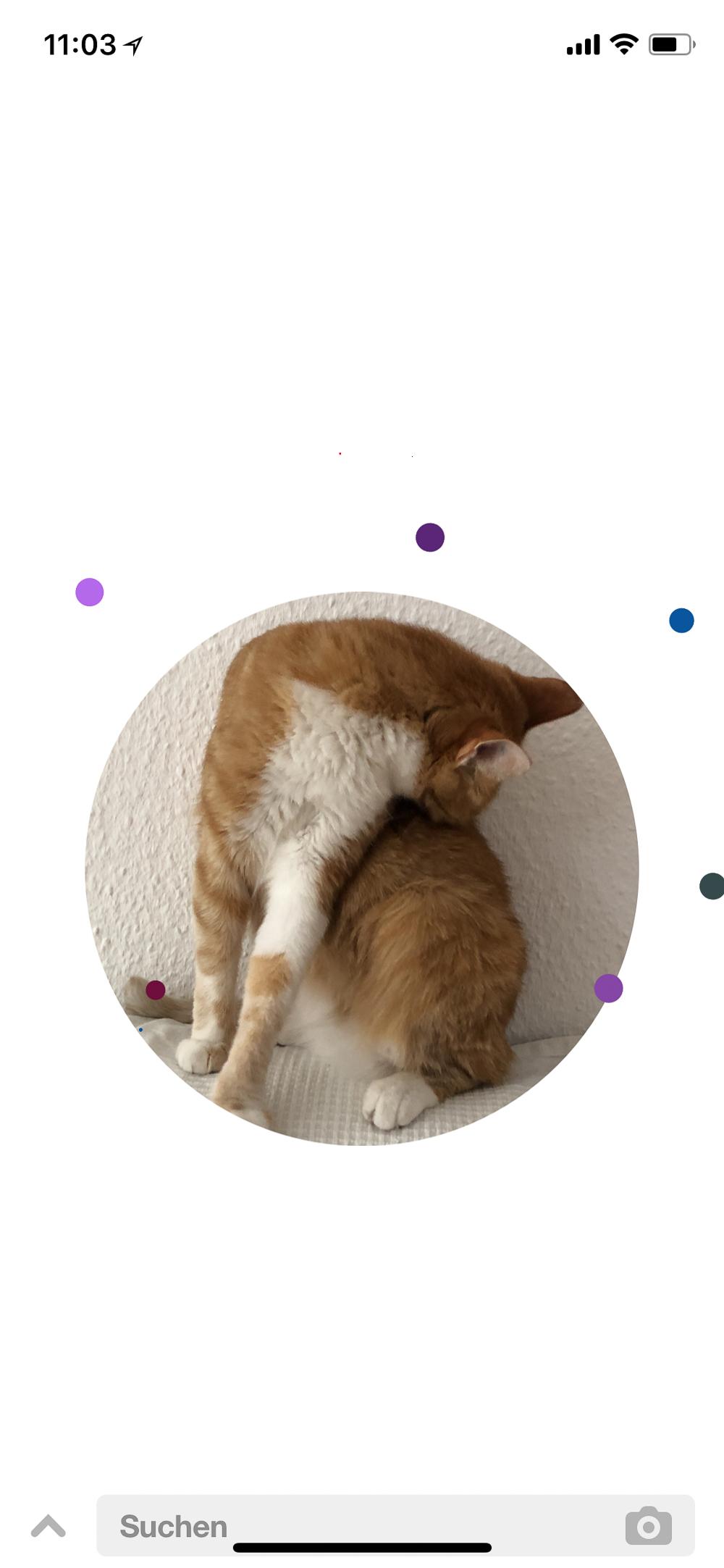 Pinterest Lens-neues Pinterest Feature-Blogger Tipps-andysparkles