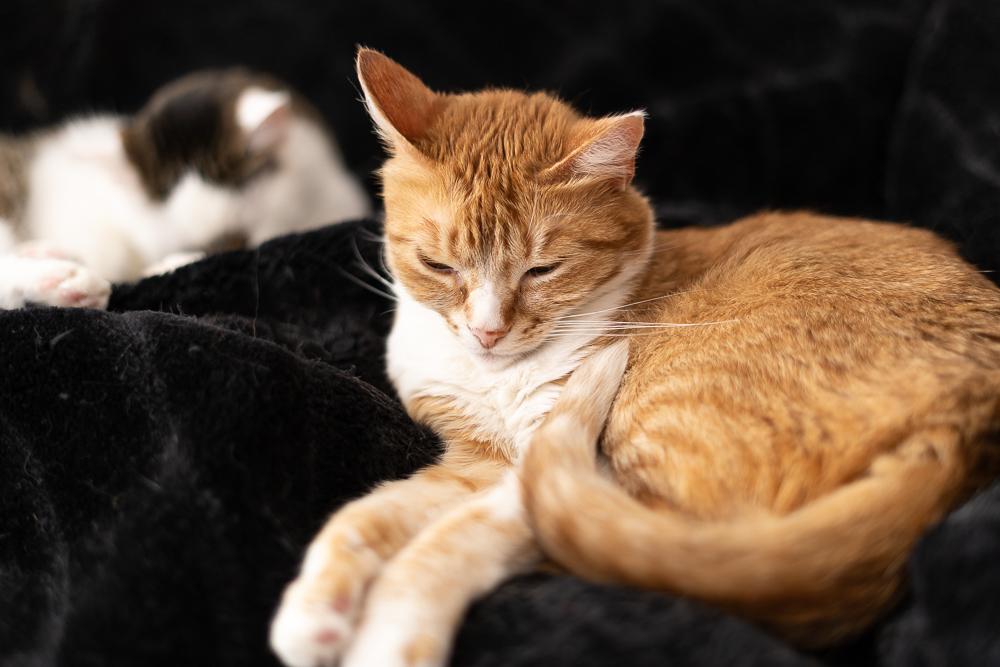 Umzug mit Katzen-mit Katzen in eine neue Wohnung-Lifestyleblog-Haustiere Umzug-andysparkles
