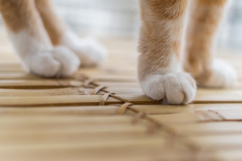 Tipps für Katzen Fotografie-Katzenfutter von Wildes Land-Katzenblog-andysparkles