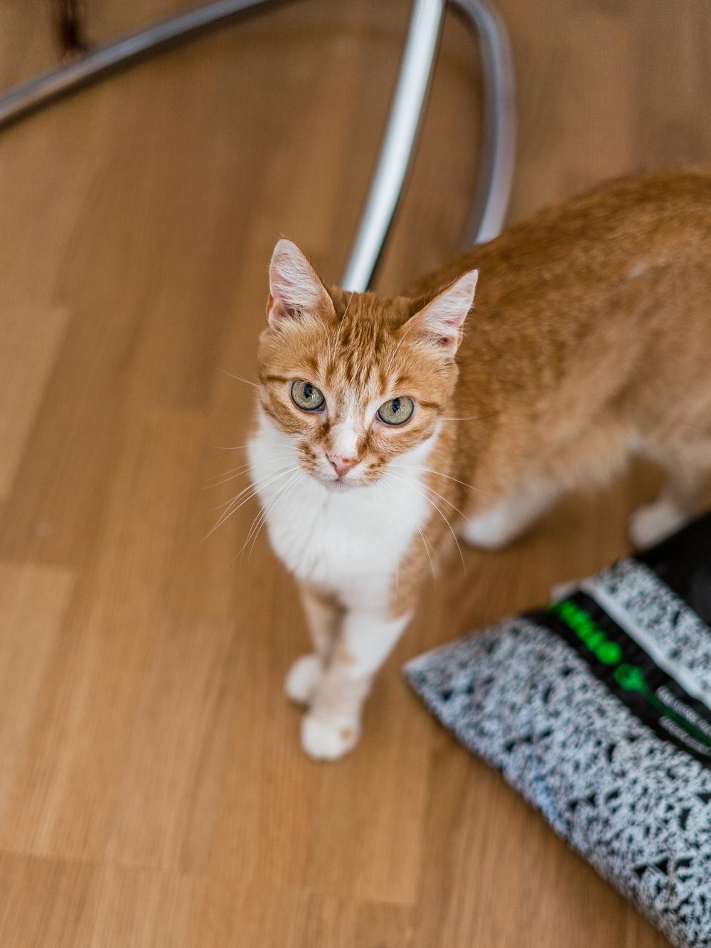 Zusammenleben mit Katzen-Wohnungskatzen-Katzenblog-Lifestyleblog-andysparkles