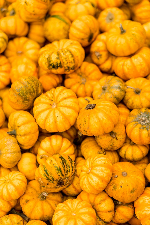 5 Dinge die du jetzt im Herbst machen musst-Kürbisbilder-Lifestyleblog-andysparkles