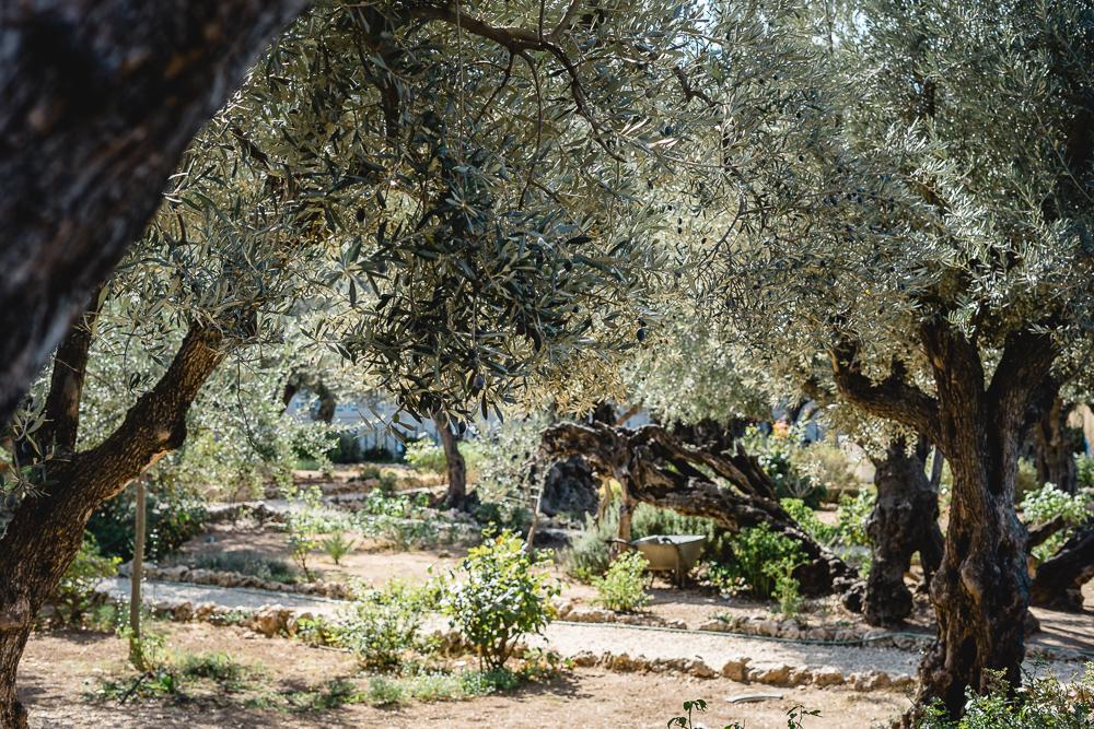Tagesausflug nach Jerusalem-Jerusalem Altstadt-Garten Gethsemane-Ölberg-Urlaub in Israel-Reiseblog-andysparkles