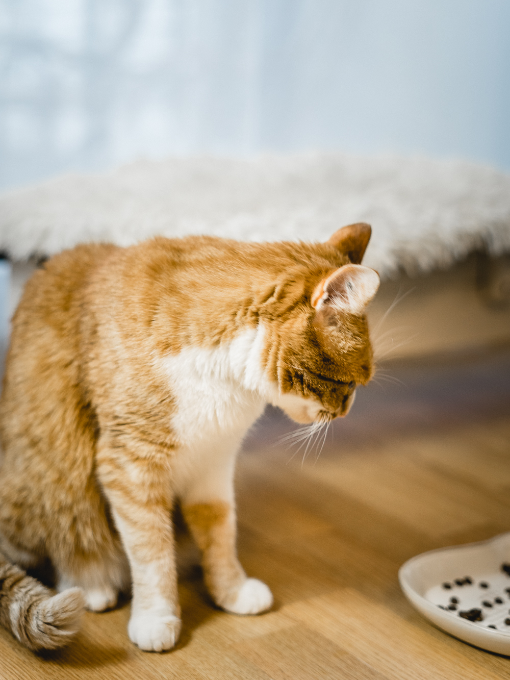 Futterumstellung bei Katzen-Almo Nature-Bio Katzenfutter-HFC Alternative-Lifestyleblog-Katzen-andysparkles