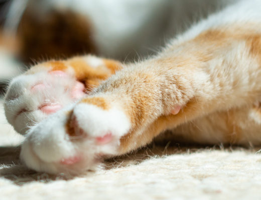 Fotografietipps für Haustiere-Hunde Fotografie-Mops Fotografie-Lifestyleblog andysparkles