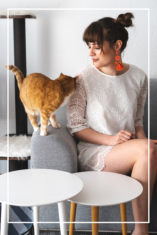 Clean-Feeding für Katzen