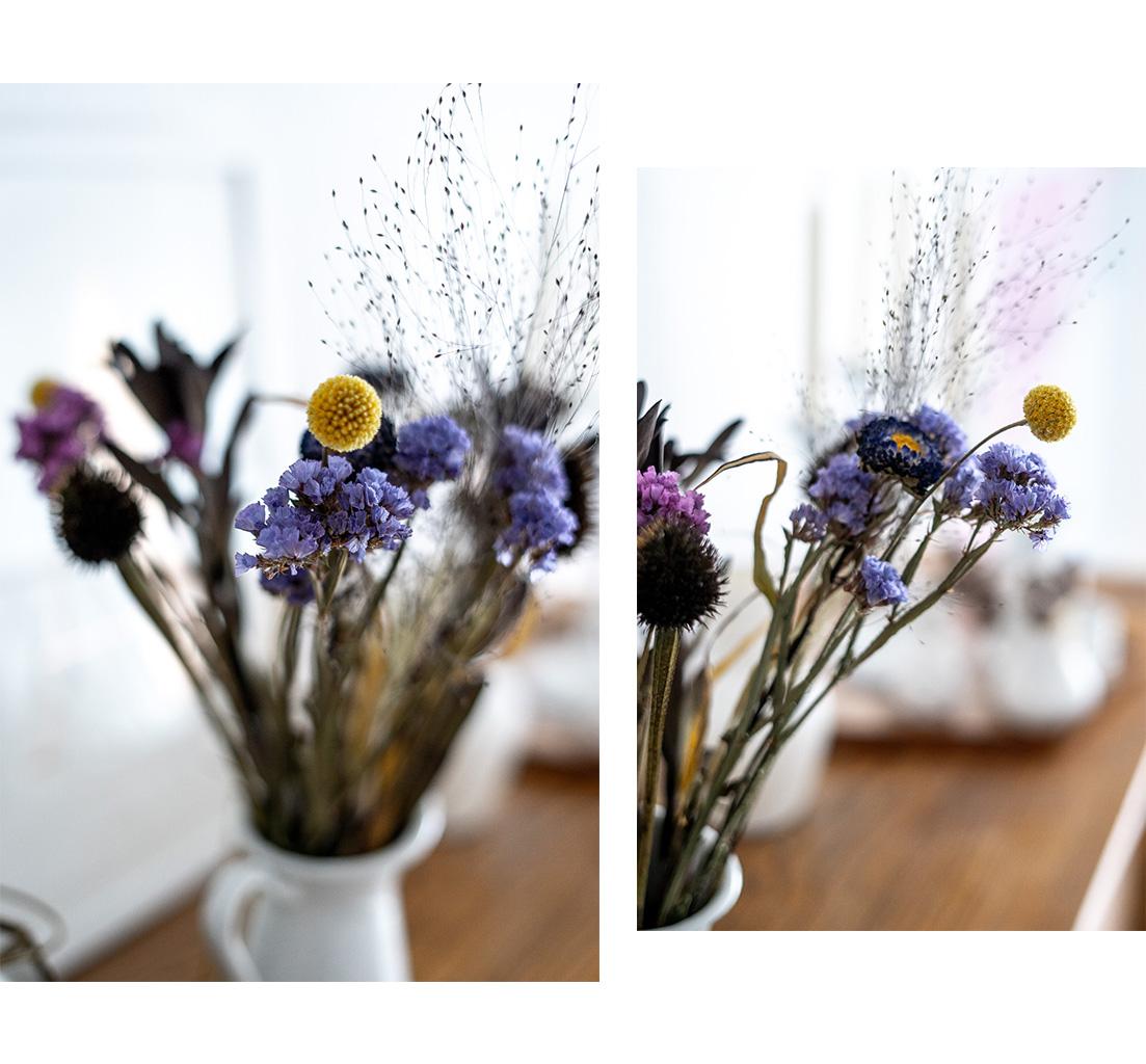 5 Tipps rund um Pflanzen