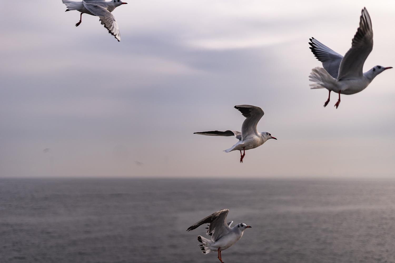 Möwen Marmarameer Türkei