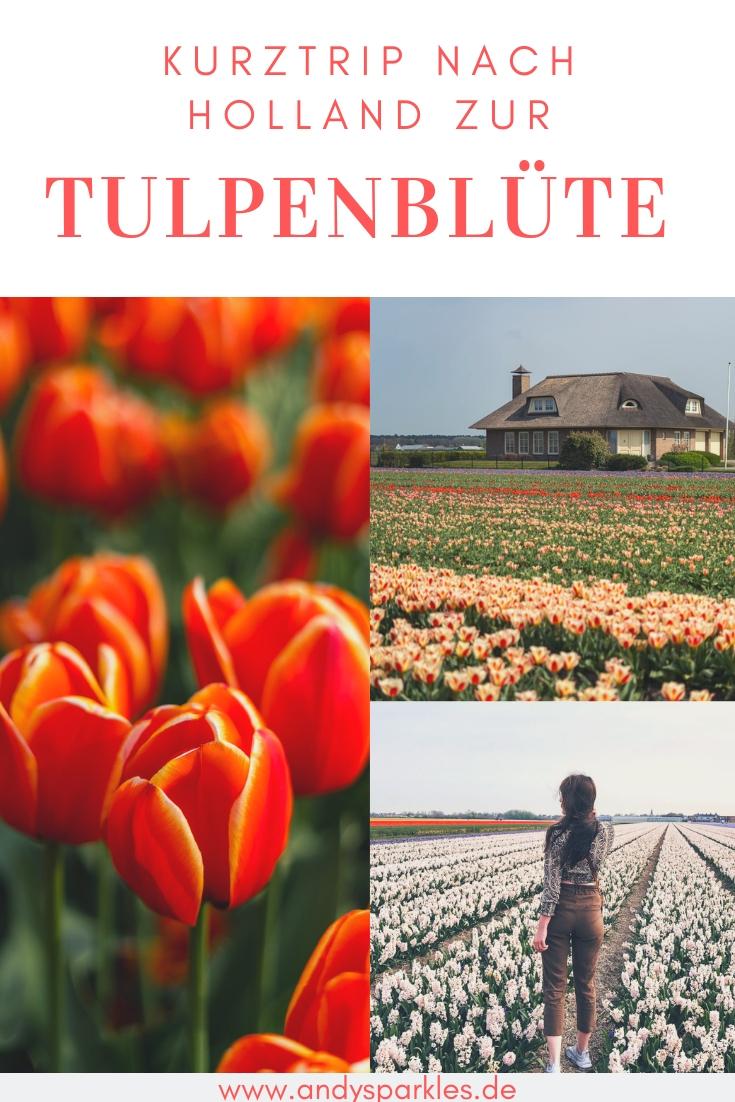 Kurztrip nach Holland zur Tulpenblüte