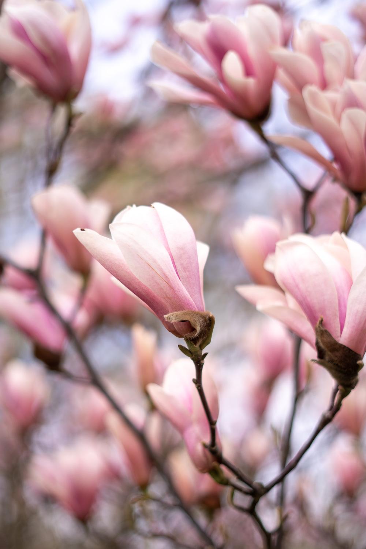 Blüten Gärten der Welt