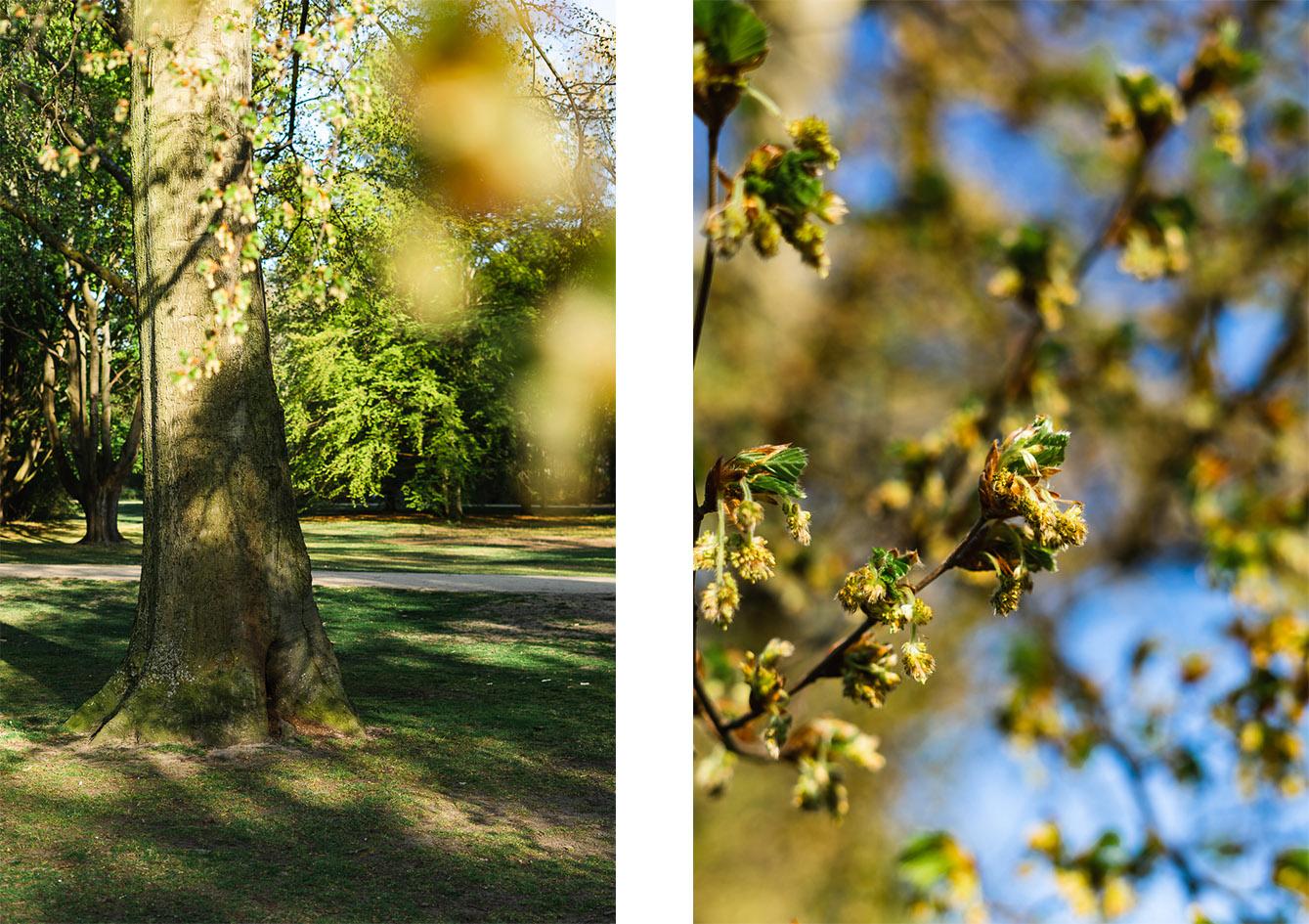 Naturbild Park Frühling