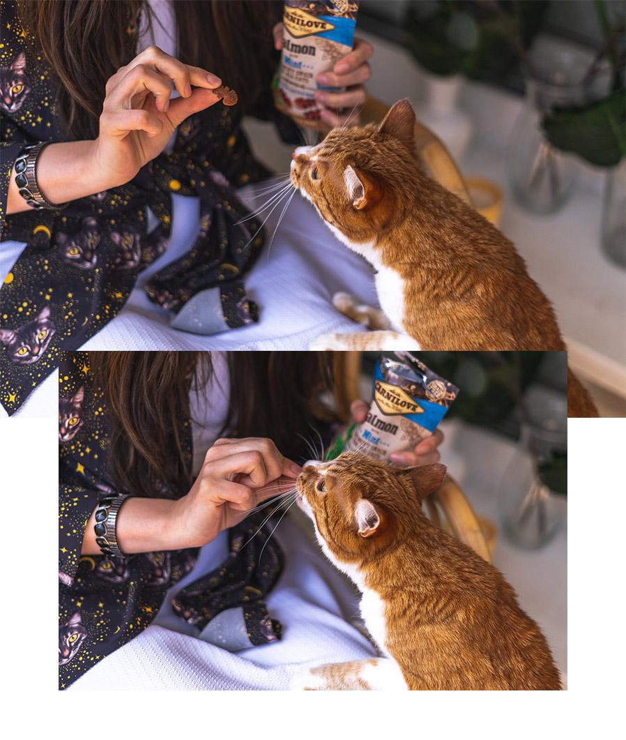 Trockenfutter oder Nassfutter für meine Katze