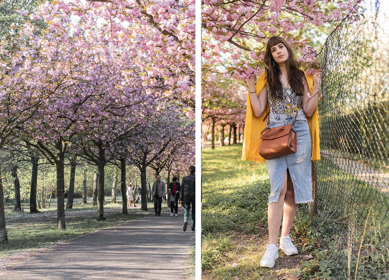 Kirschblüte Mauerpark Berlin