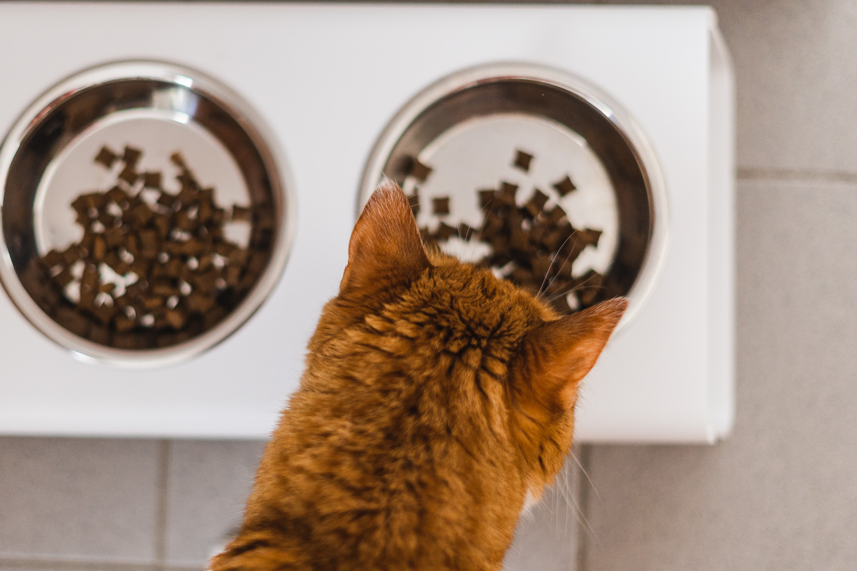 Katze beim Futtern