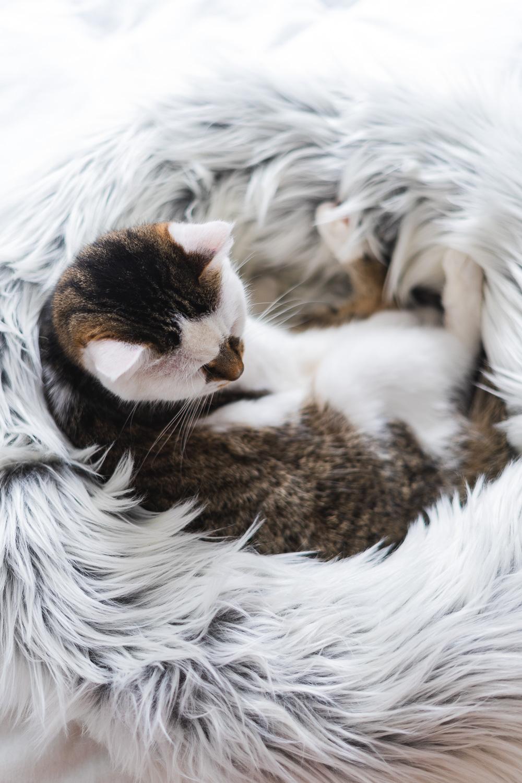 Was brauchen Katzen wirklich
