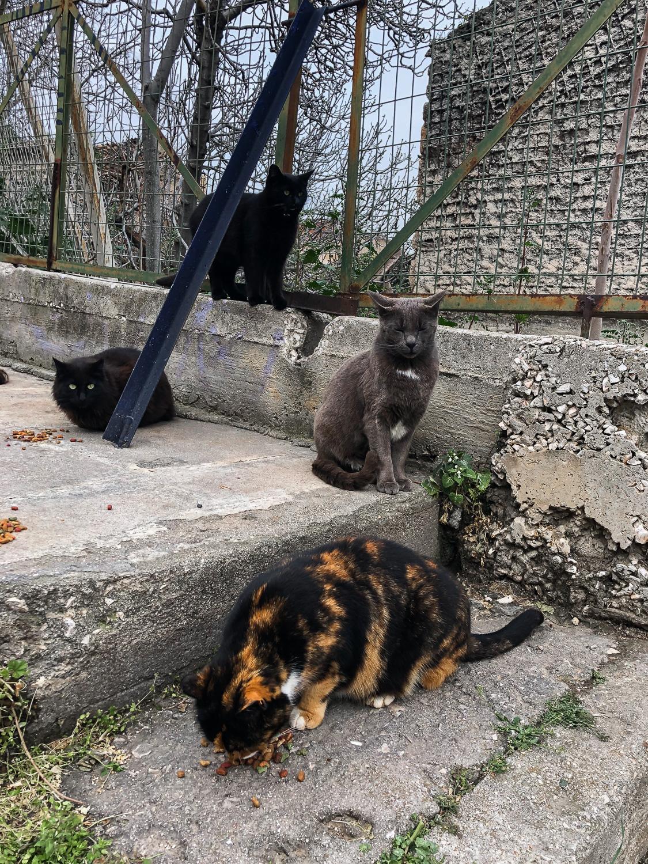 Straßenkatzen in Athen