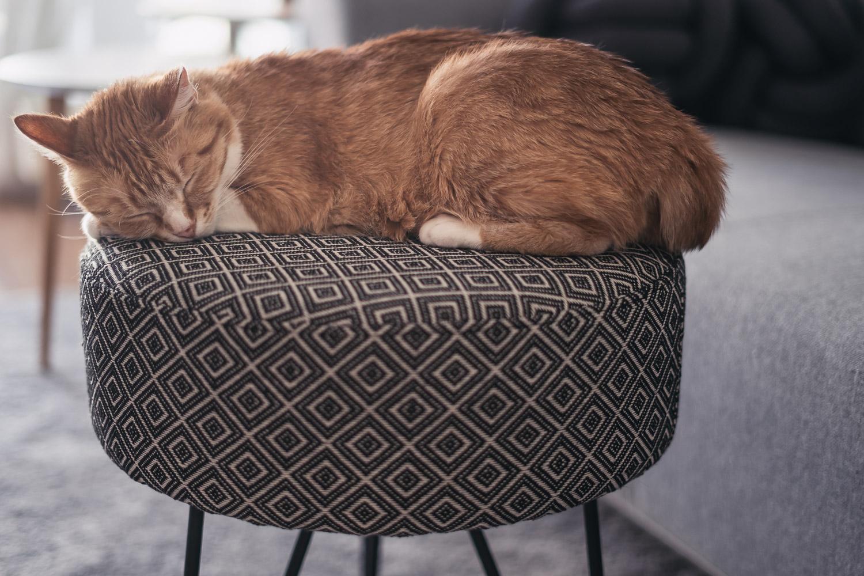Stilvoll Wohnen mit Katze