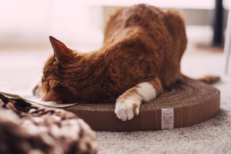 Katzen Einzelhaltung