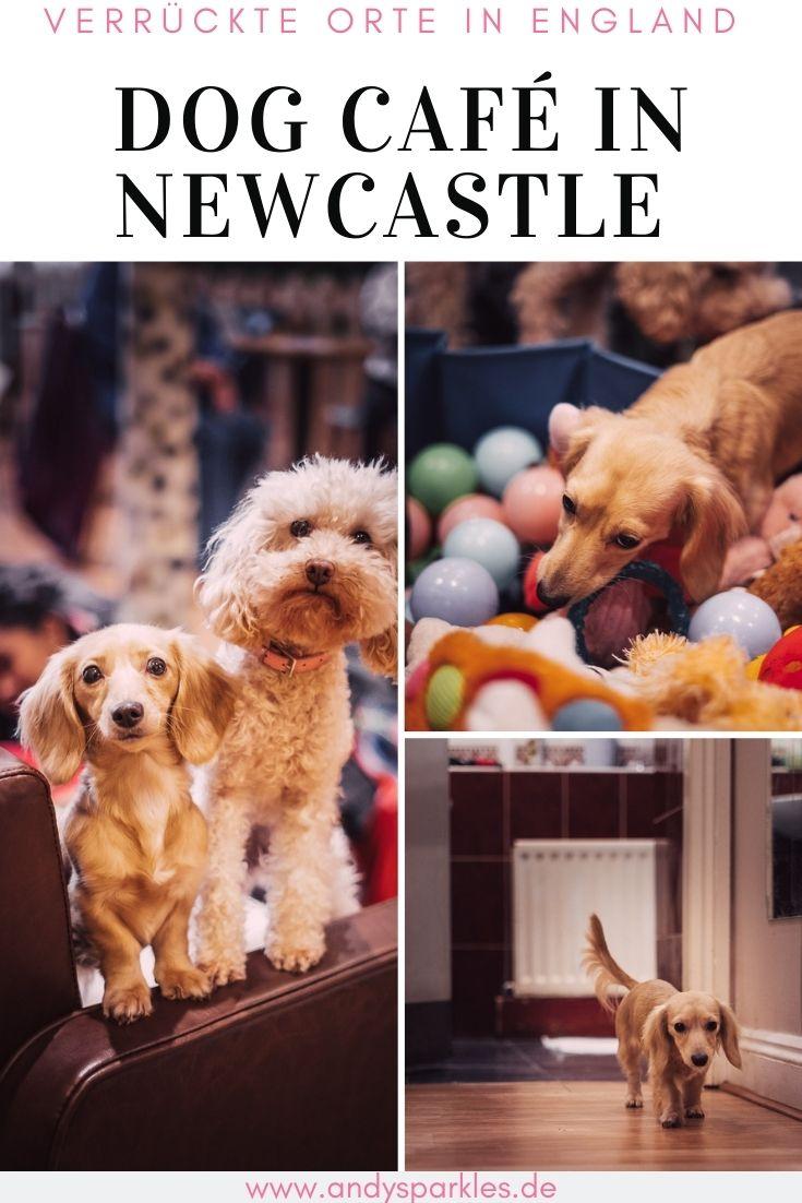 Hundecafé in England