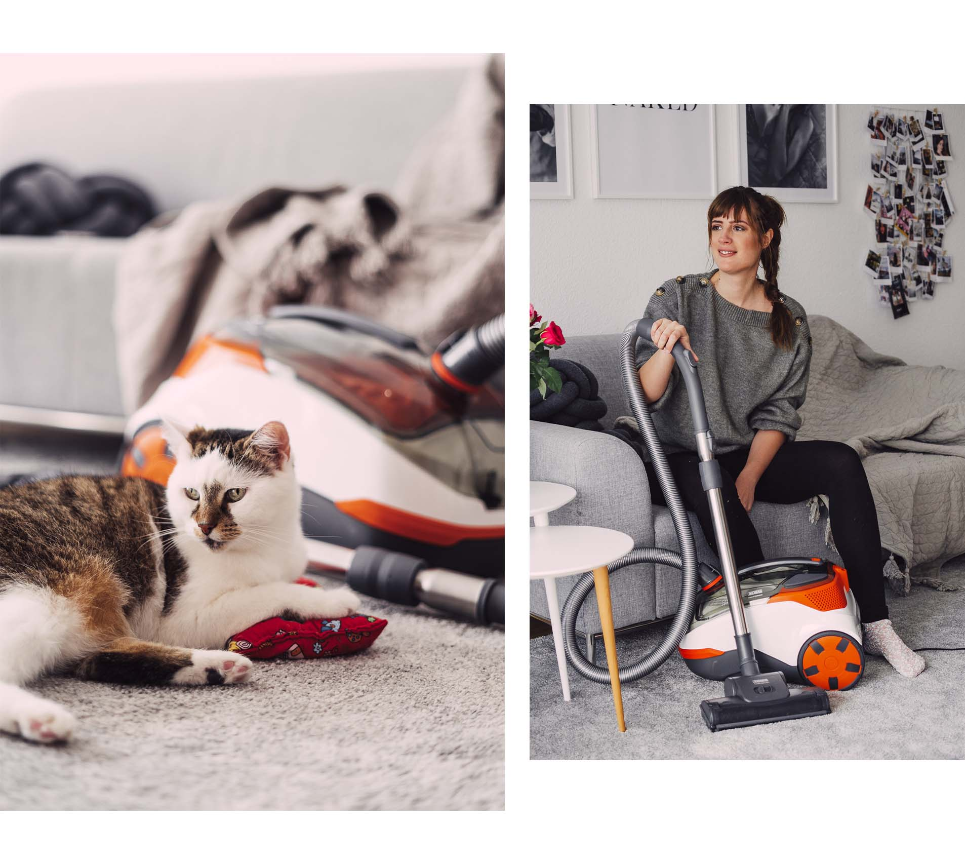 Fellwechsel bei Katzen