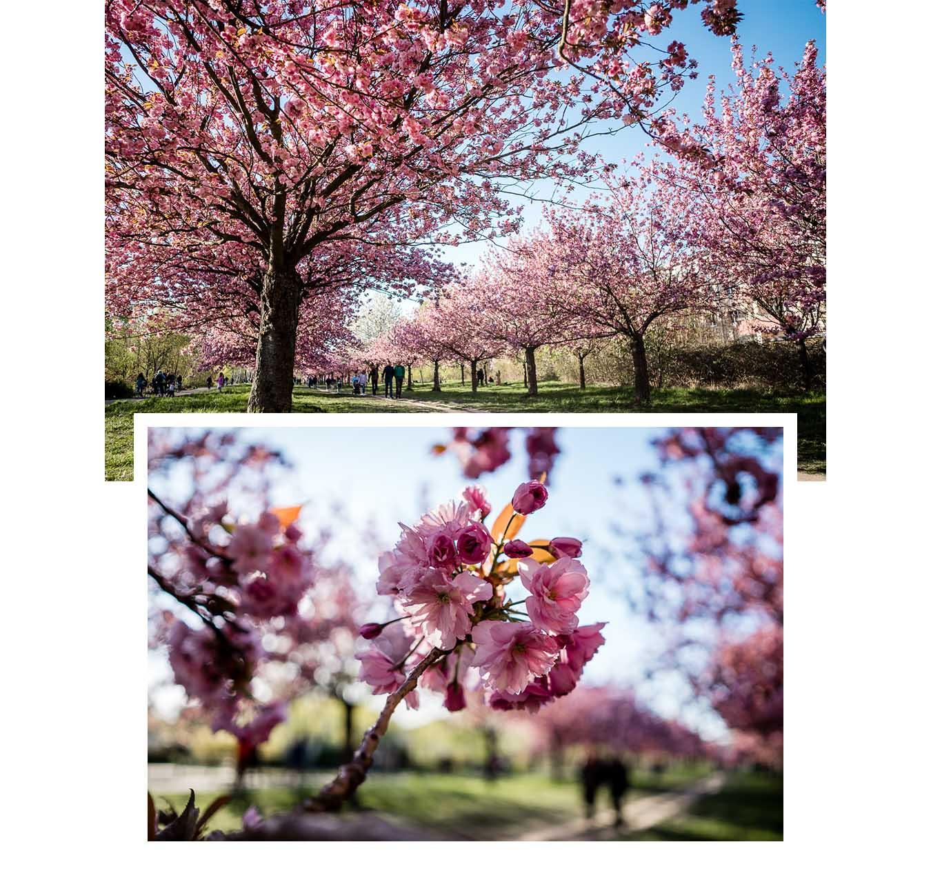 Blütenspots zum Fotografieren