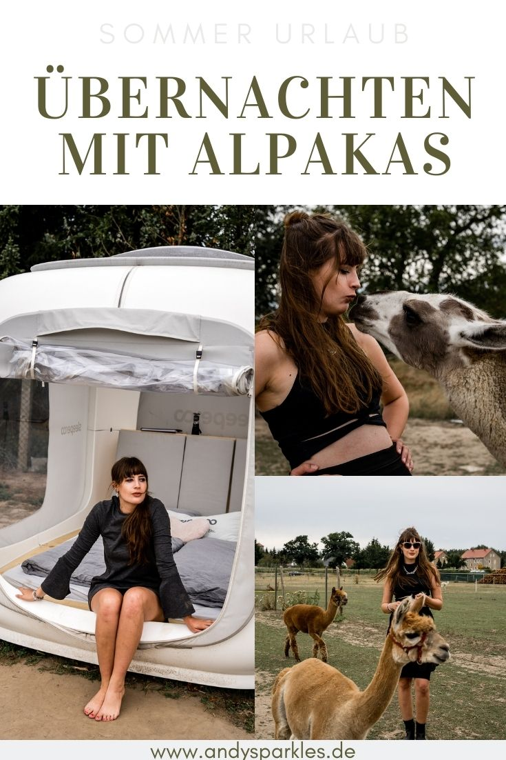 Übernachten mit Alpakas