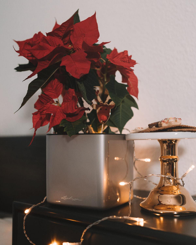 Ungewöhnliche Wünsche für Weihnachten