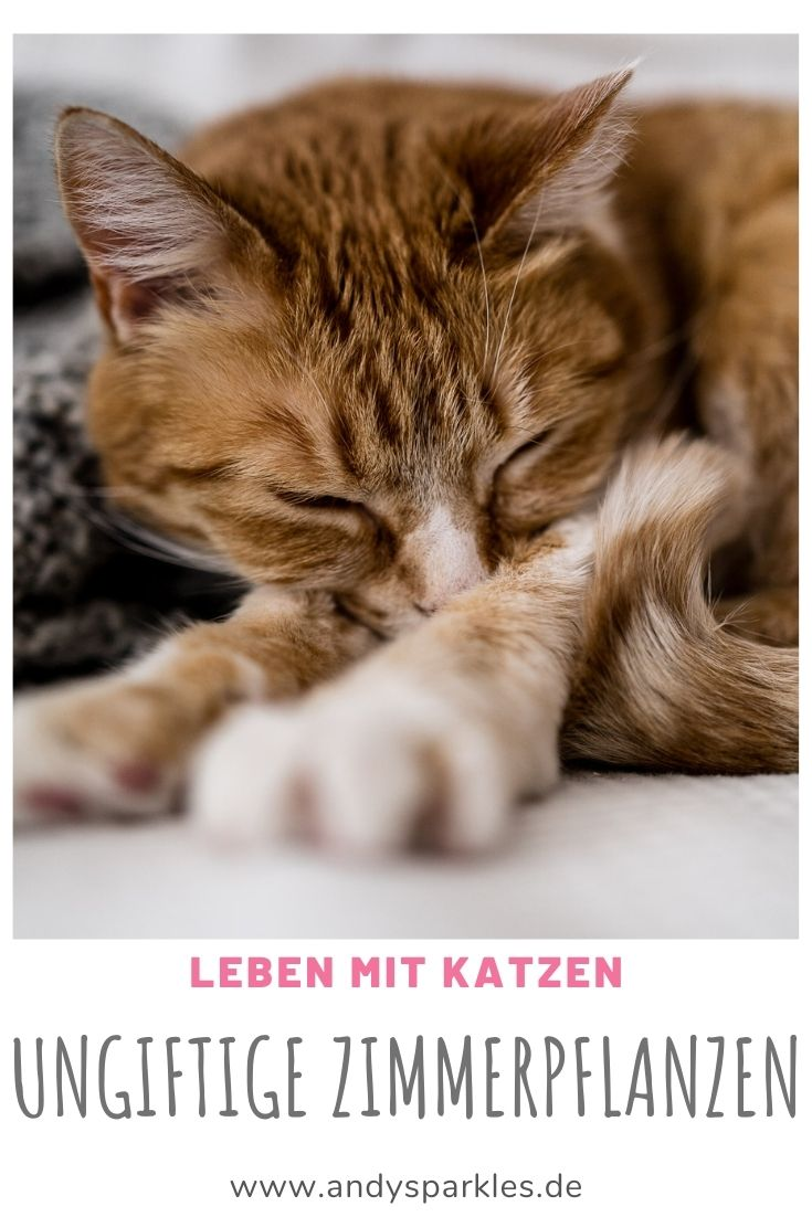 Ungiftige Zimmerpflanzen für Katzen