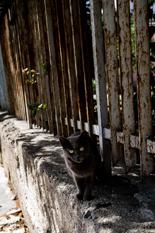 Katze auf Sizilien