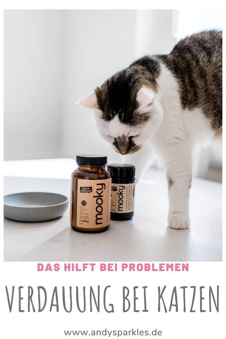 Verdauungsprobleme bei Katzen